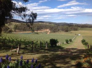 Warrenmang vineyard