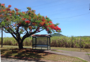 Bus Stop Mossman