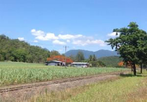 Cane Farm