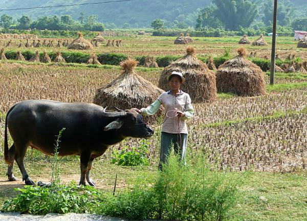 Farmer with Water Buffalo