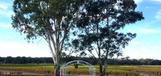 Balgownie Vineyards